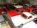 103_collection_mustangs.jpg