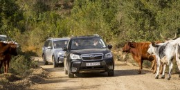 Subaru Forester Vs Subaru XV Crosstrek: Which Crossover To Buy?