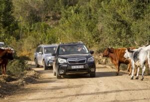 Subaru Forester Vs Subaru XV Crosstrek: Which Crossover To Buy?