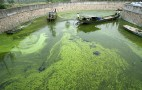 Sapphire Energy Gets $144 Million To Turn Algae Into Gasoline