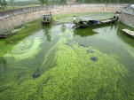 U.S. Perfectly Placed For Algae-Based Biofuel Production