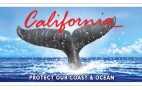 New CA License Plate Saves Whales, Angers Original Artist