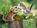 Catfight