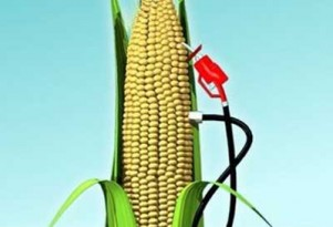 EPA Keeps Corn-Based Ethanol Mandate, Rejects Suspension Request