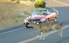 Deer Season--And Car Crash Time--Is Here