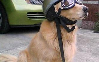 TCC Tip: Don't Let Your Dog Ride Shotgun