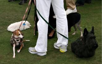 Subaru Has Record Social Media Engagement For Its 'Dog Walk' Event
