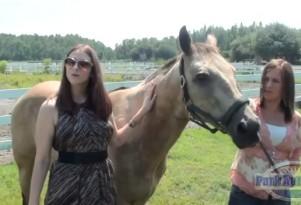 The Coming Carpocalypse: Florida Dealer Accepts Horse Trade-In