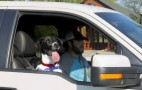Cars & Pet Safety: How To Keep Dogs Safe In The Heat