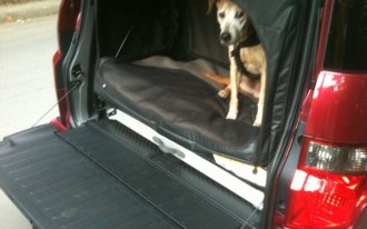 Tested: 2010 Honda Element, Dog-Friendly Package