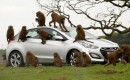 Hyundai durability testers monkey around
