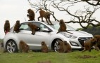 Hyundai Uses Dozens Of Monkeys To Test Durability