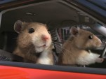 Kia 'Hamsters' commercial