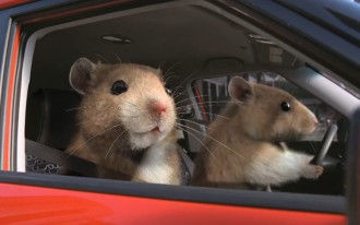 Kia's Hamsters Scurry Off With Nielsen's Top Ad Award At The 2011 New York Auto Show