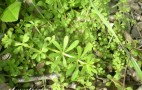 Herbs For Your Battery: Don't Make It Tasty, Do Make It Greener