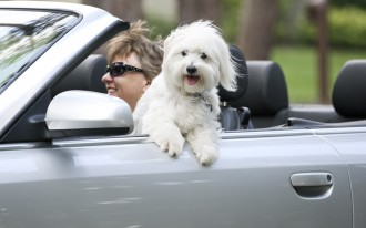 6 tips for taking road trips with your dog