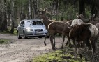 Volvo Avoids Animals With New Collision Detection Tech