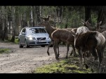 Volvo animal avoidance system