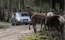Volvo animal detection safety development