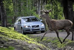 Congratulations, America: You're Hitting Fewer Deer