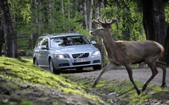 Congratulations, America: You're Hitting Fewer Deer