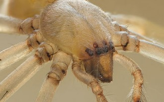 Spider Problems: Hyundai, Honda Models Also Caught In The Web