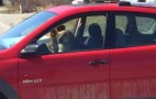 """Dogs """"Drive"""" Away With Owner's Pontiac Vibe"""