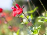 Flower developed by Toyota to offset emissions from its Prius facility