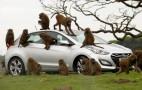 Hyundai Uses Dozens Of Monkeys To Test Durability