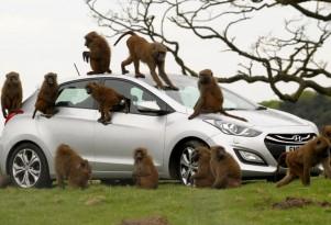 Hyundai durability testers monkey around